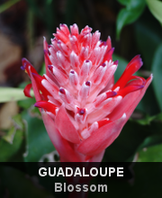 Highlights - Guadeloupe - Blossom