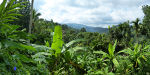 Knuckles Mountains - Rainforest - schlesser