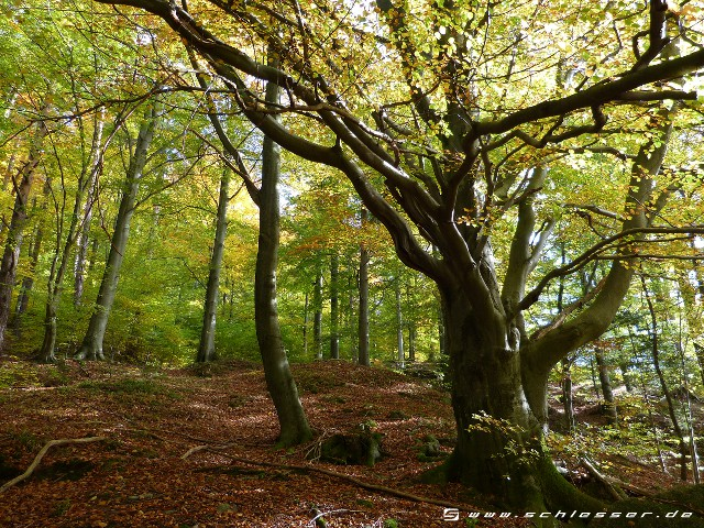 Germany Black Forest (Autumn) Picture