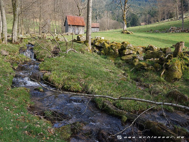 Germany Black Forest (Spring) Picture