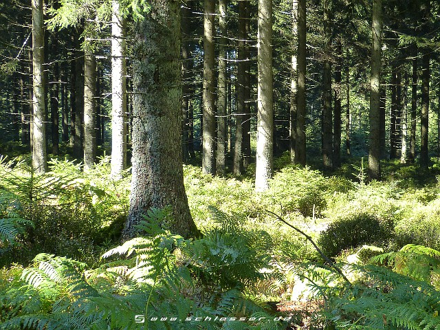 Germany Black Forest (Summer) Picture