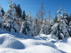 Germany Black Forest (Winter) Picture