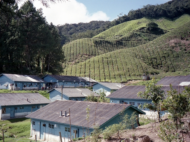 Malaysia Cameron Highlands Picture