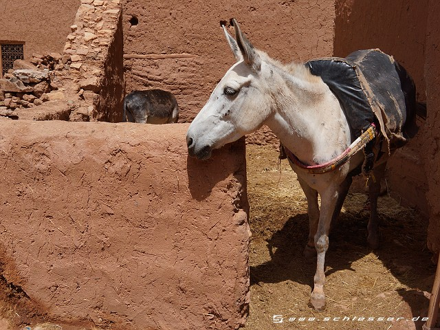 Morocco Ait Ben Haddou Picture