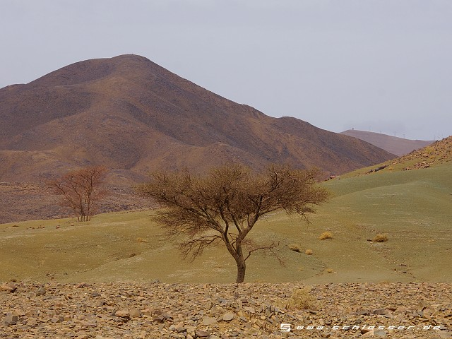 Morocco Draa Valley Picture