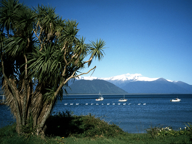 New Zealand Picture