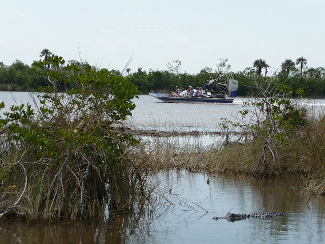 USA Everglades Picture