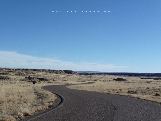 USA Petrified Forest Picture